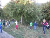 Kinder plündern einen Apfelbaum.